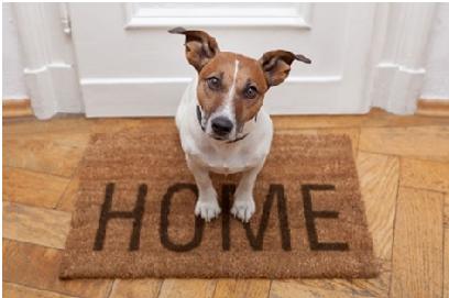 Cani e condominio: una convivenza possibile?